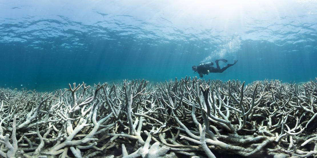 028_coral_bleaching_at_heron_island.jpeg
